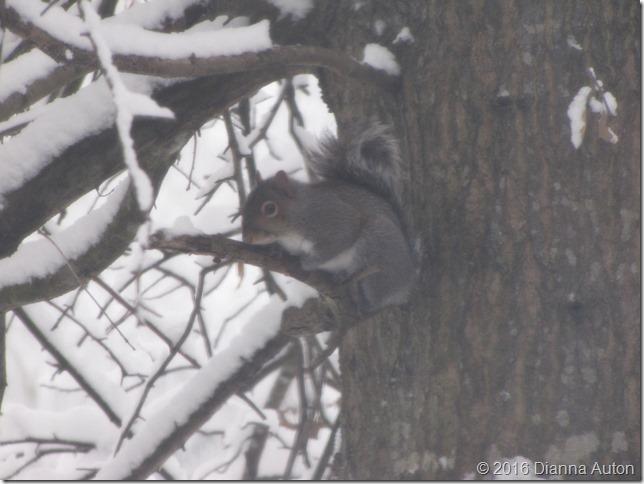 1 squirrel 008