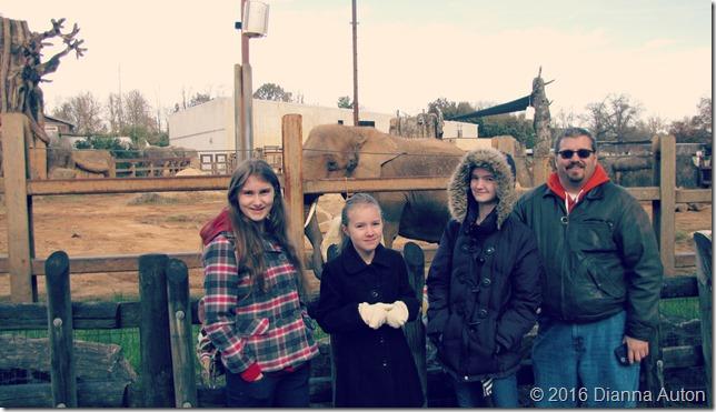 9 zoo elephant 015